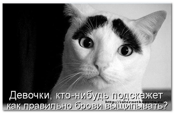 Zachem-kommentirovat-blogi3