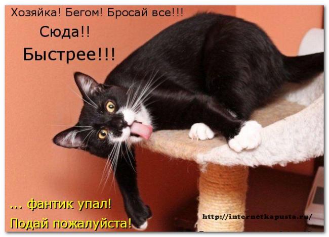 Zachem-kommentirovat-blogi4