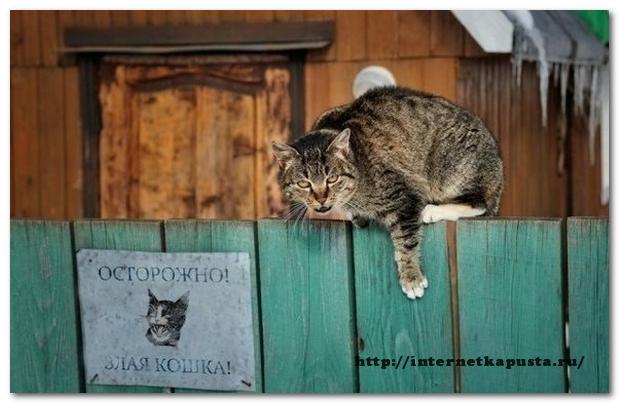 kak-izbavitsya-ot-vrednyx-privychek2
