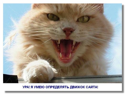 kak-opredelit-dvizhok-sajta1